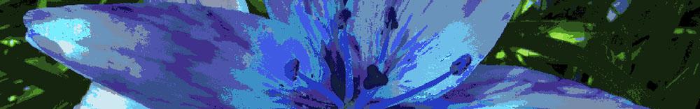 daylily-purple-banner